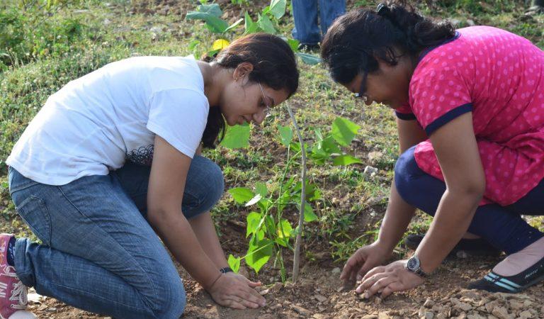 IIM Udaipur conducts tree plantation drive on Gandhi Jayanti