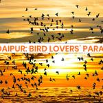 Udaipur: Bird Lover's Paradise!