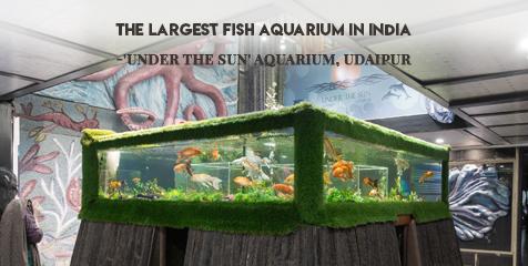 Fish Aquarium Udaipur
