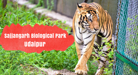 Sajjangarh Biological Park Udaipur