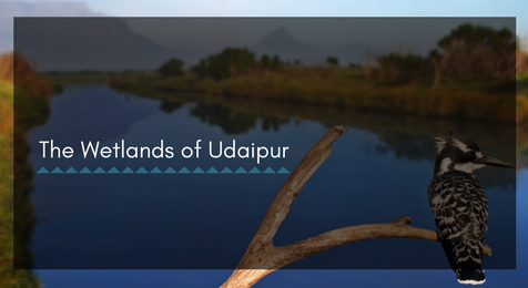 Know About the Wetlands in Udaipur- These Save Water, Wildlife and Plants!