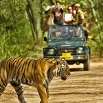 Wildlife Sanctuaries and Nature Parks Udaipur