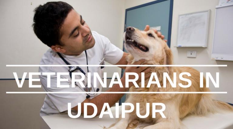 Veterinarians in Udaipur