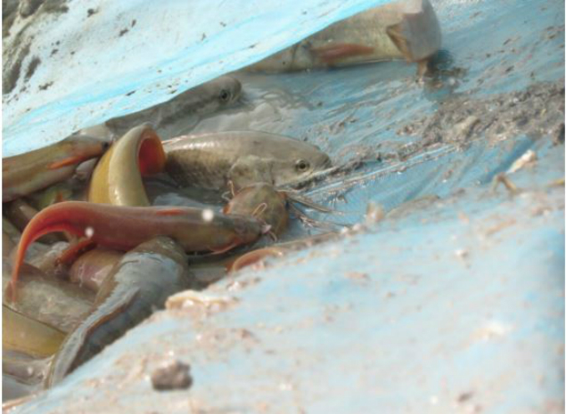 Udaipur Villagers Save Dying Fish! | News