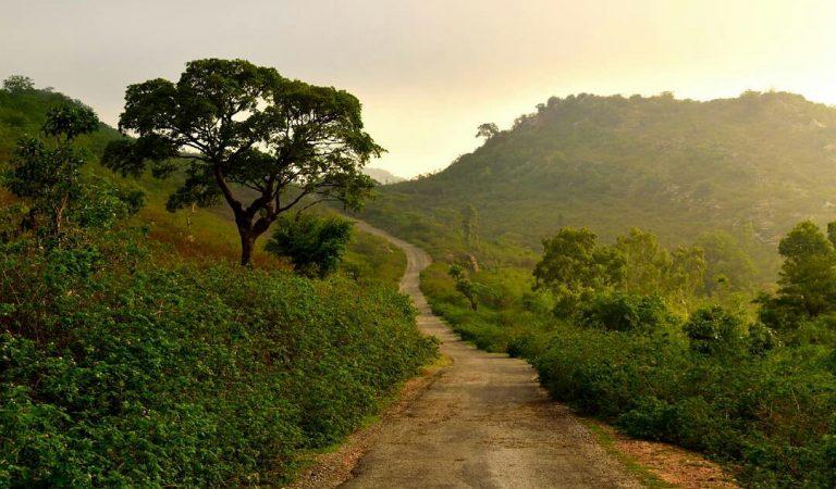 पिपलिया जी – वह गाँव जहाँ कभी फूल खिला करते थे, अब चारो-ओर काँच के टुकड़े मिला करते हैं।