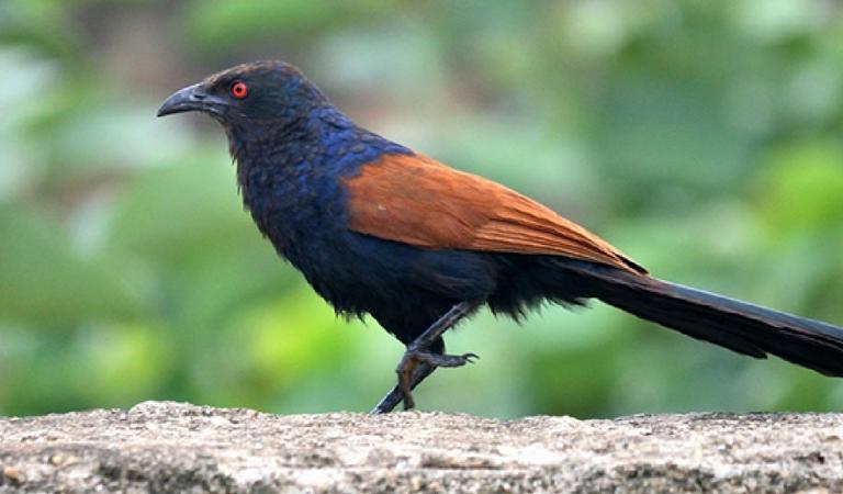 Sitamata Wildlife Sanctuary – Birding Tours in Udaipur