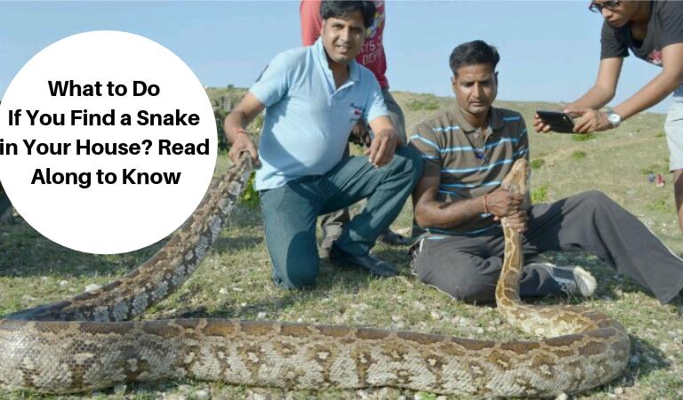 Snake Catcher in Udaipur: Padam Singh Rathore