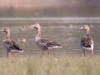 Udaipur Bird Festival