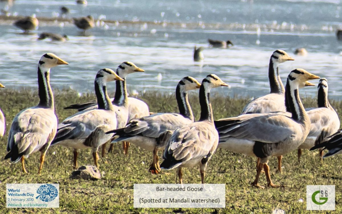 Gayatri Seva Sansthan organising Bird Watching Tour on World Wetland Day