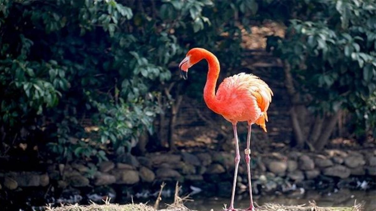 Gulab Bagh Bird Park to open for tourists from June 2020