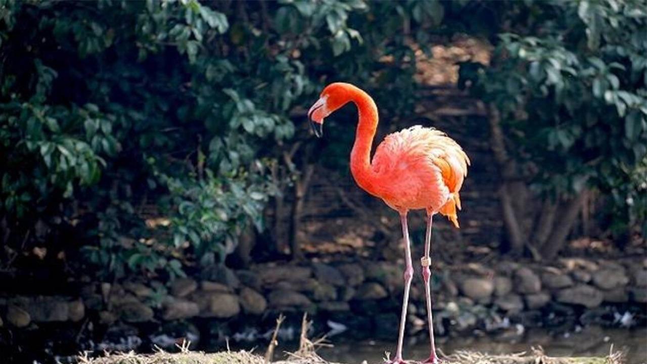 Udaipur Bird Park