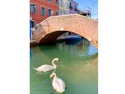 River of Venice which experienced return of aqua life because of Coronavirus
