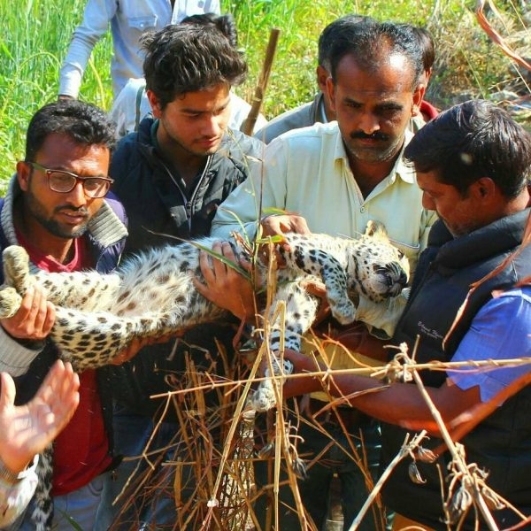 Animal Rescue in Udaipur